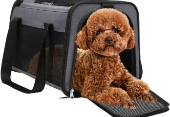 Cavapoo Dog Carrier Bag